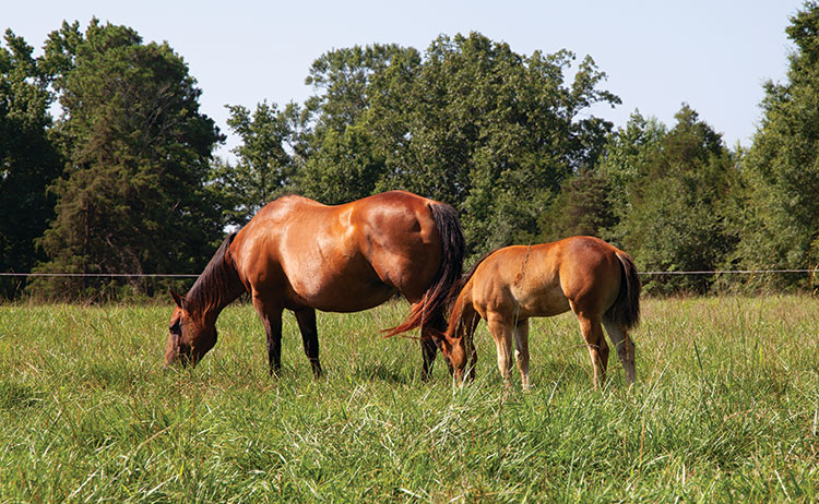 is forage the basis of the equine diet