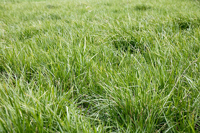 Get after grasses before heading | Hay and Forage Magazine