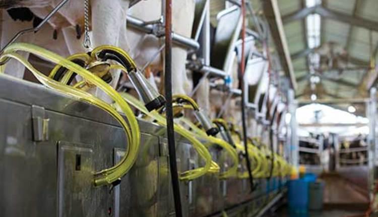 140810_491-milking-parlor.jpg