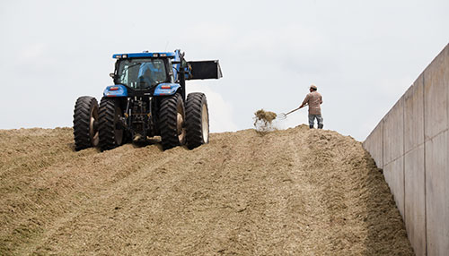 packing a corn silage pile