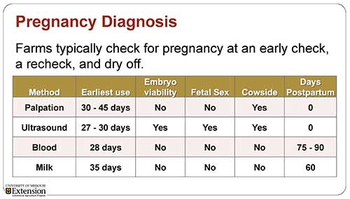 pregnancy diagnosis