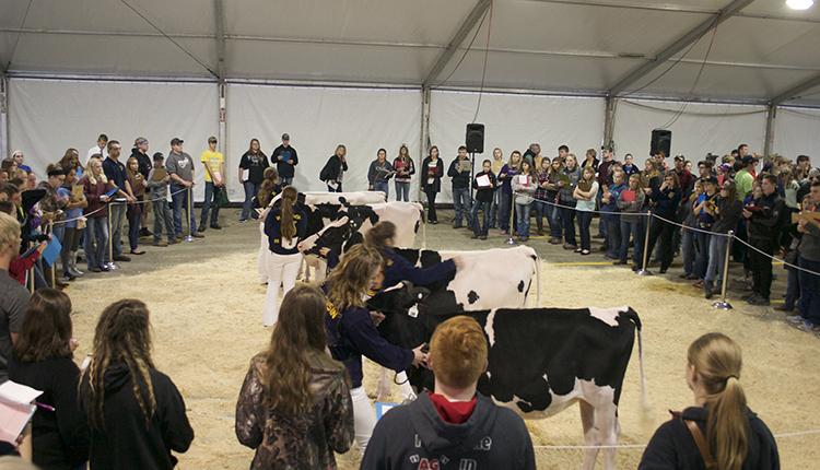 16-FFA-dairy-judging