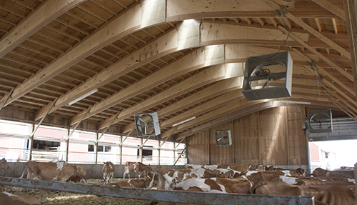 dairy barn with fans