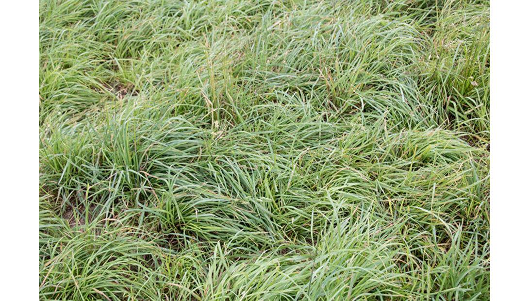 160910_558-cool-grass