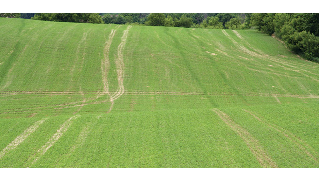 170210_94-alfalfa-field