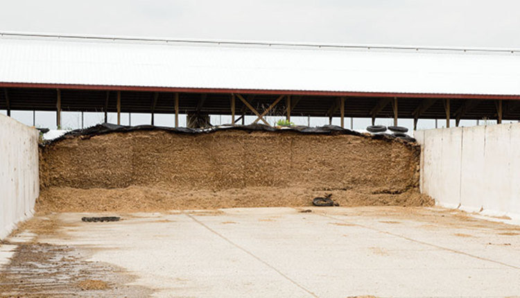 170410_259-silage-face