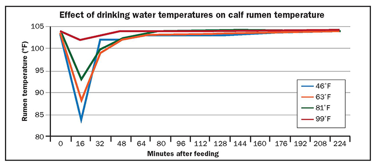How much water should dairy calves drink?