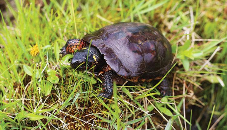 180925_556-turtle