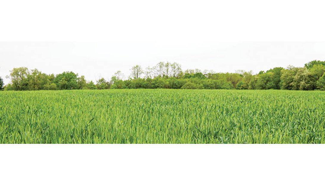1912_FNG-grass_