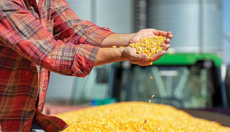 200225_127-corn