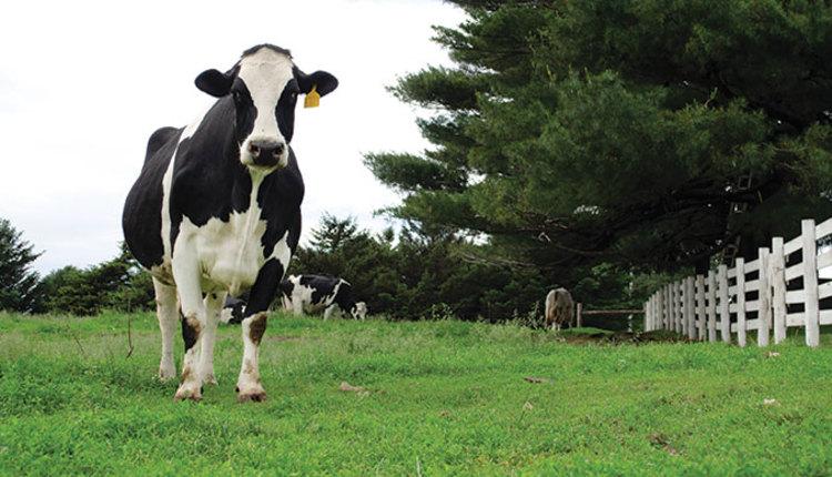 2006_349_pasture