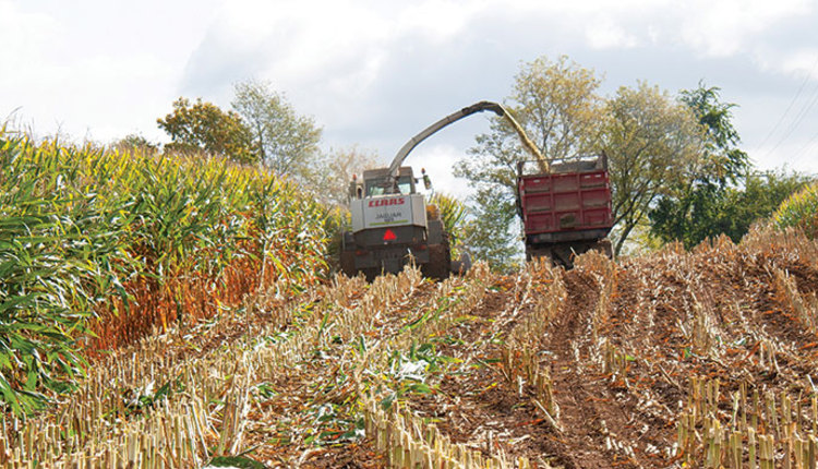 200925_553-corn-silage-chopping