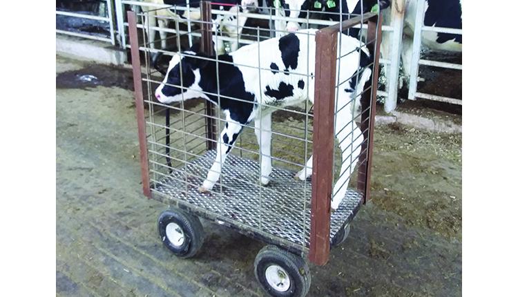 210110_33-calf-cart-hh