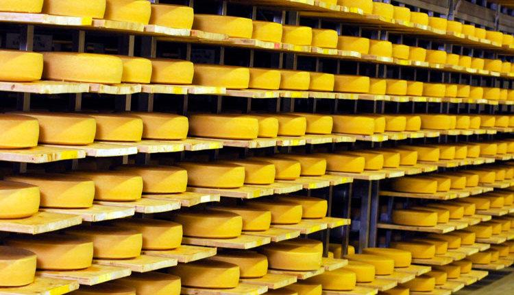 Allen-cheese_web2