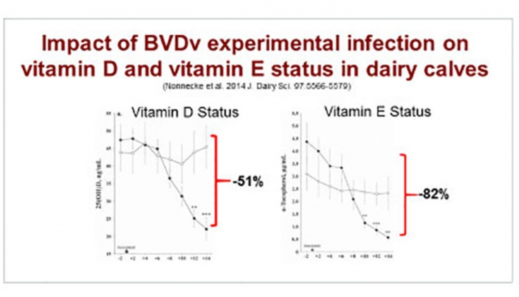 BVD-experiment-750