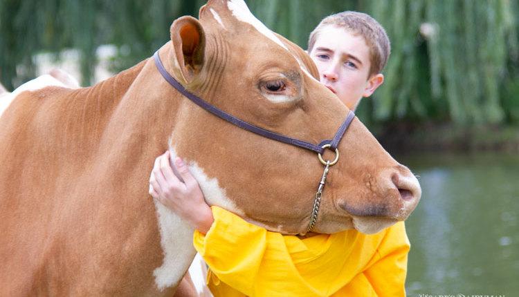 Bernstein-hug-cow_web2