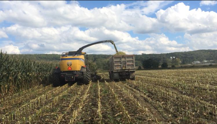 Corn season