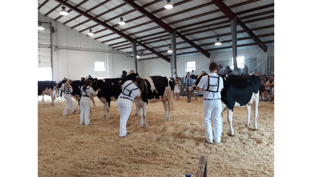 Dairy Judging (2)