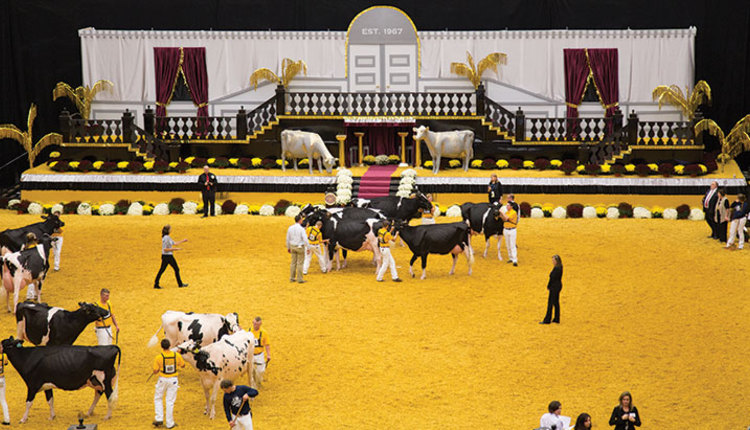 EXPO-48-show-ring