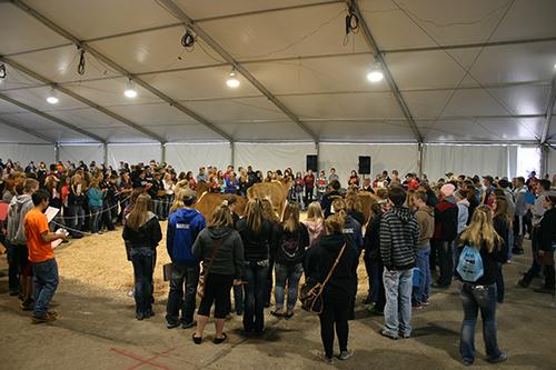 FFA dairy judging contest