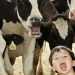 The ABCs of cows