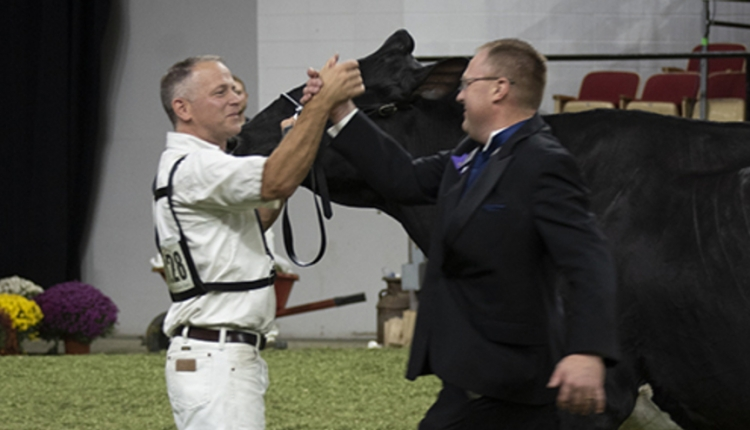 Holstein-Congrats