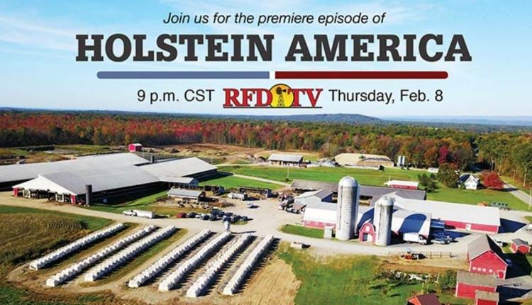 Holstein_America