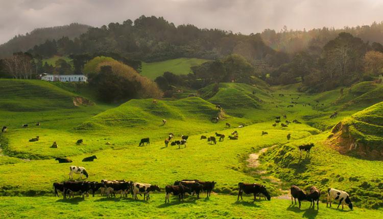New-Zealand_ph2