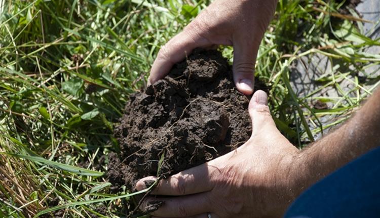 Pasture walk soil
