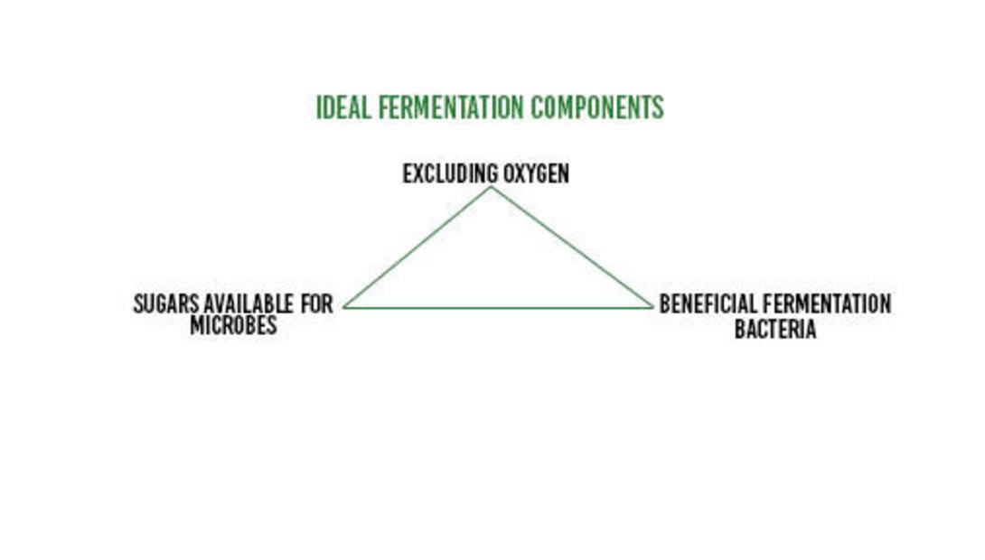 RRL_Ideal-Fermentation-Components_Figure-1_Feed-Hy