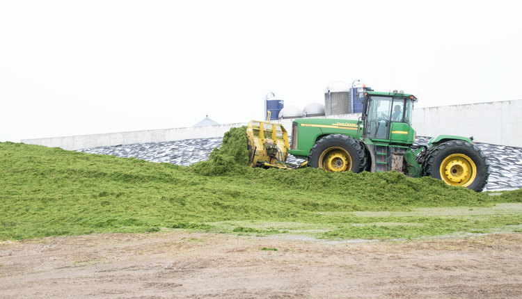 Silage_ph5