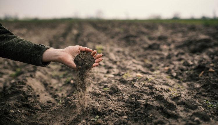 Thomas-soil_web3