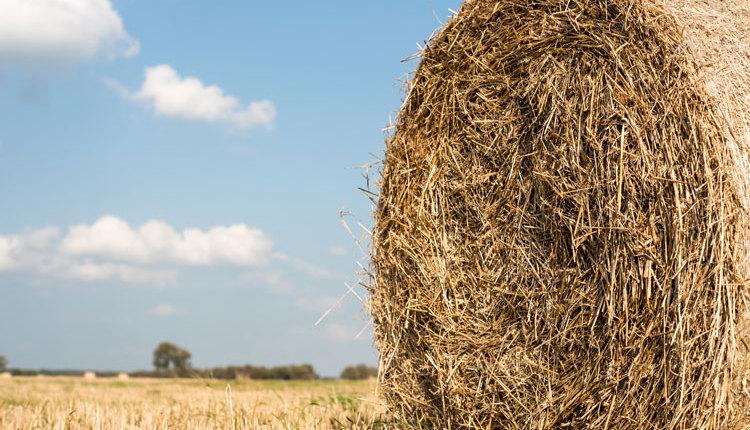 Wilder-hay-rolls_web2