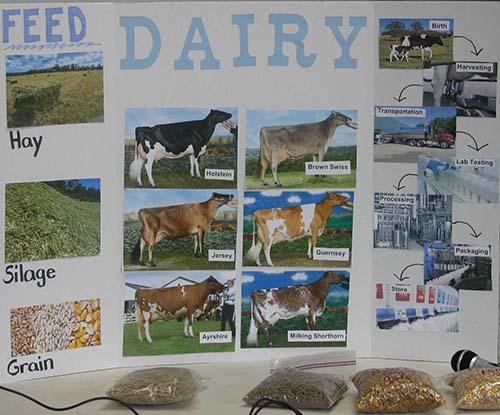 dairy display