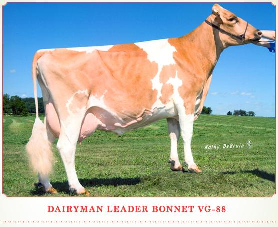 Dairyman Leader Bonnet