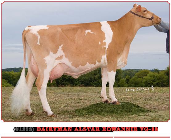 Dairyman Alstar Rowannie