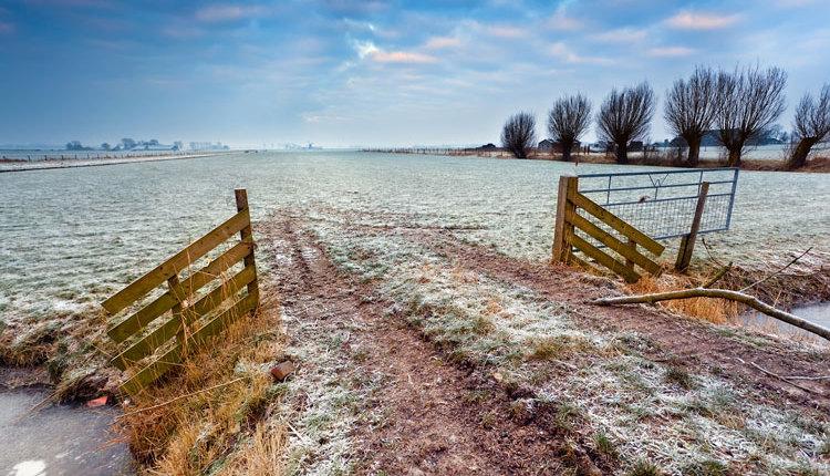 frost-field_ph