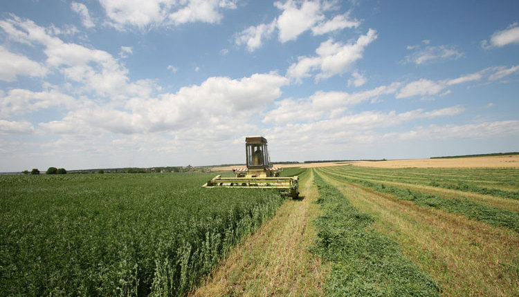 green-harvesting_ph1