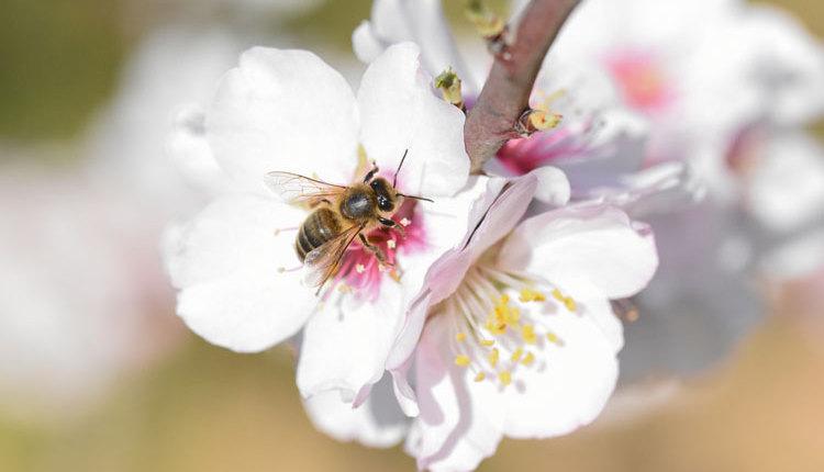 honeybee_ph5