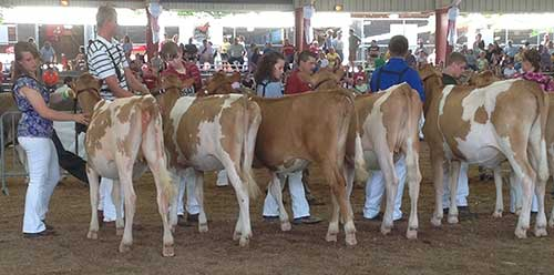 Dairy showmanship: Some things do change